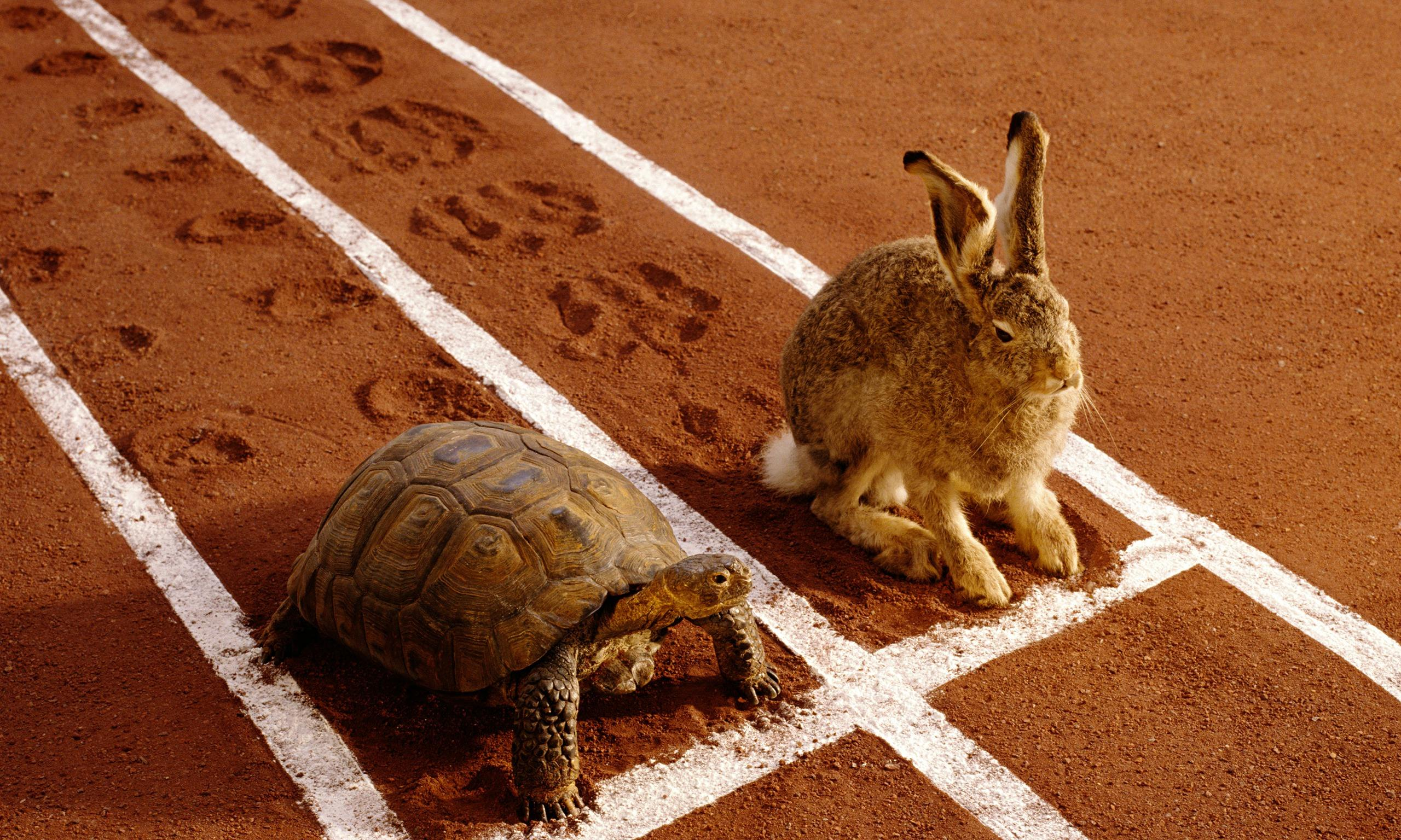 Rabbit and turtle